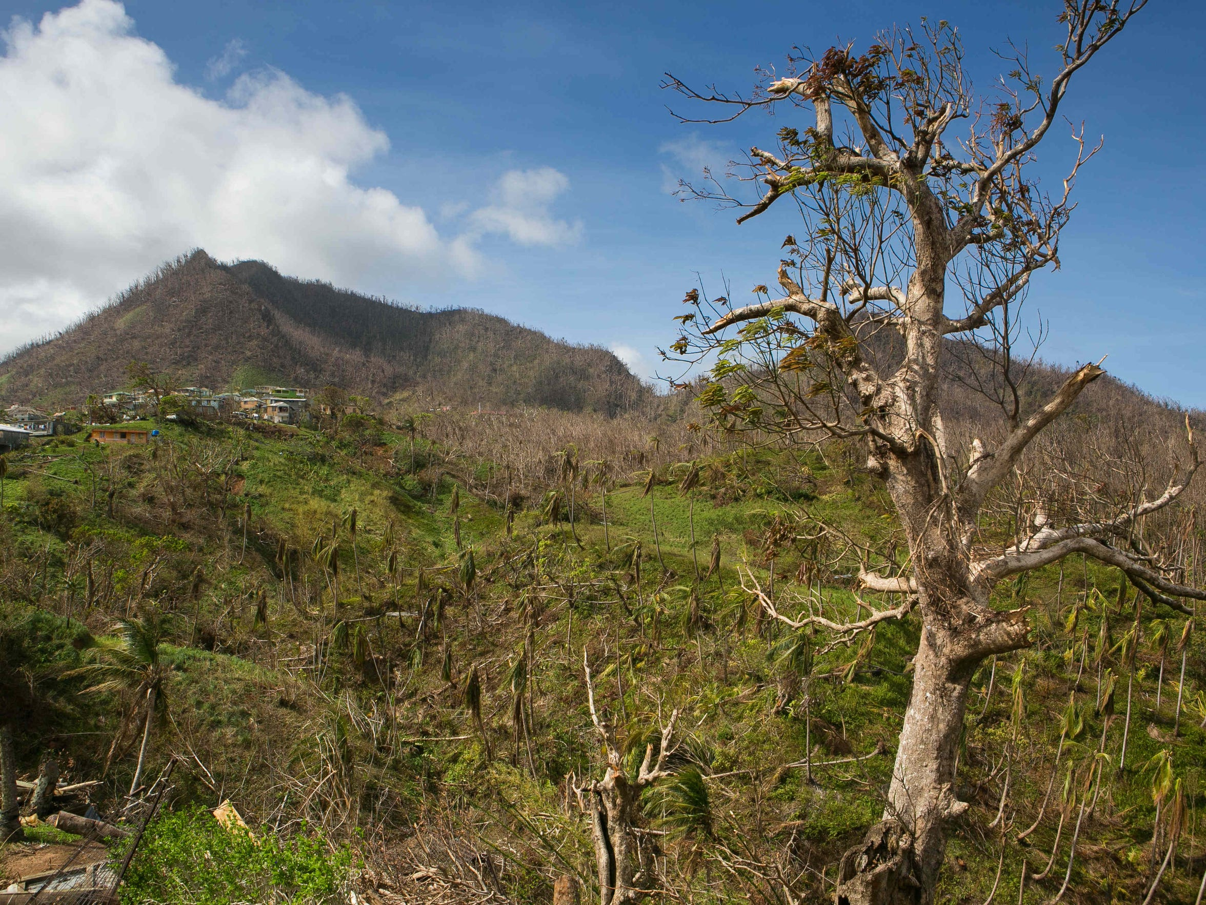 The hills around the village of Paix Bouche are stripped of leaves from the forces of Hurricane Maria.