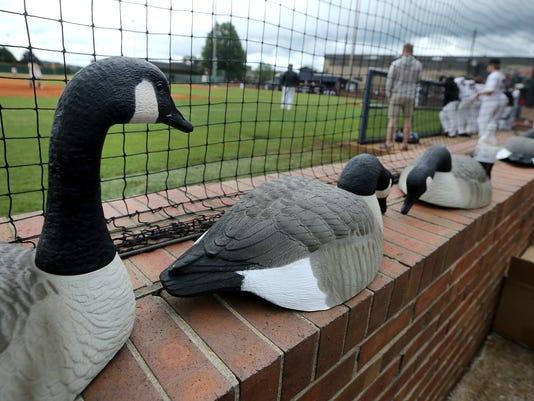 636312637592608667-08-Creek-vs-Jefferson-Baseball.jpg