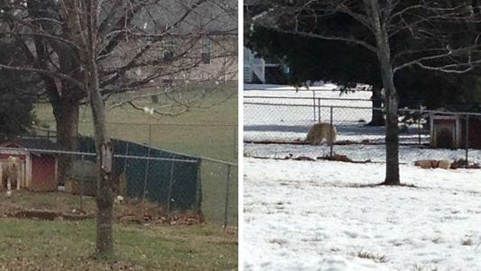 Two photos, one from January (left) and one from Feb. 23 (right) show what a viral video didn't show, that two Huskie mix dogs have shelter provided. The video, purporting to show the dogs being abused, caused a local couple and their daughter to receive Internet death and arson threats.