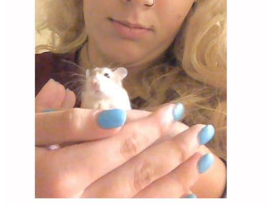 spirit_hamster