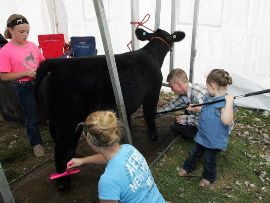 Beef show Monday at the Coshocton County Fair.