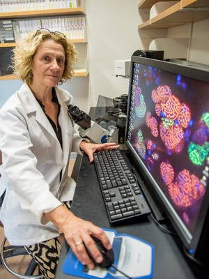 Catherine Ovitt researches the functioning of the salivary glands.