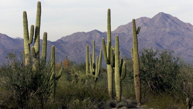 The Sonoran Desert National Monument includes three mountain ranges and two hilly areas, all separated by wide valleys.