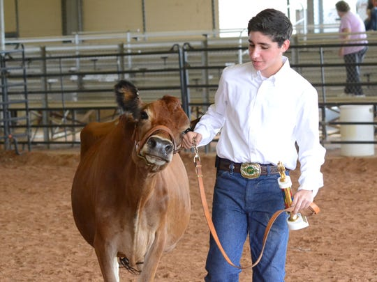 Benjamin Kaplan, 15, walks his first place dairy cow out of the show ring at the Rapides Parish Fair on Thursday.