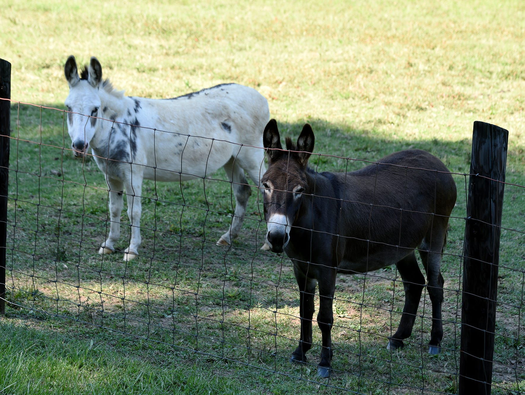 Hillsboro mascots Lou (left) and Xote stand at their field off Murray Lane in Brentwood.