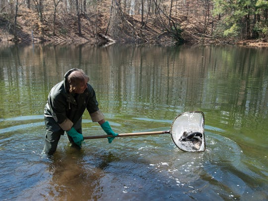 Mark Zimmerman a fisheries biologist with the Delaware Division of Fish and Wildlife, releases rainbow trout into Tidbury Pond in Dover.