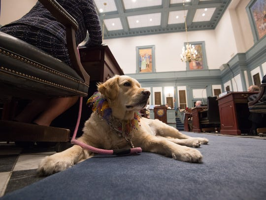 Rep. Helene Keeley (D) Wilmington South and her golden retriever Hebe in the house chambers during session.  The house would be voting on a bill to make the golden retriever the state dog for one year.