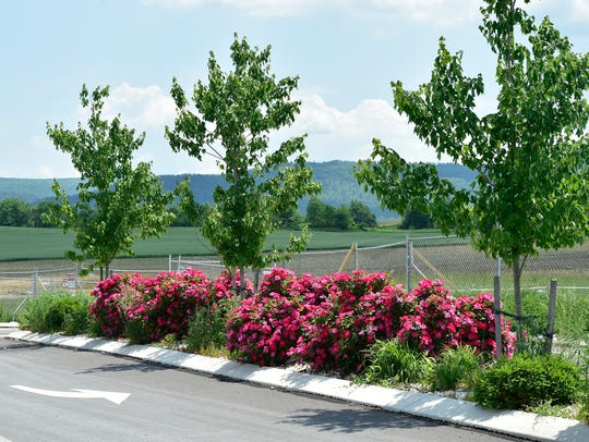 Landscaping can be seen Wednesday, June 1, 2016 at