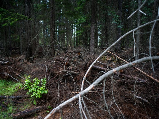 Piles of tree limbs and debris left behind after Mennonites finished logging the area. Breitenstein worries the dead plant matter will become a fire hazard when it dries.