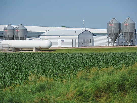 One of Sunrise Farms' high rise pullet barns Friday,