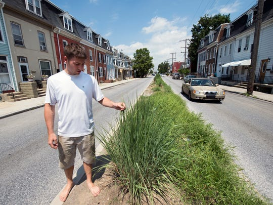 Frank Szymanski with what remains of some former plantings in the 700 block of East Philadelphia Street in York Tuesday June 28, 2016