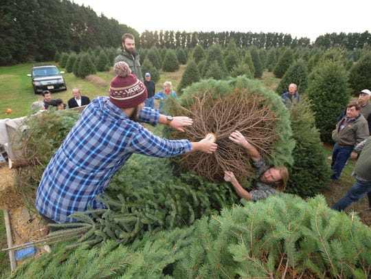 Families pick out trees at the Coleman Christmas Tree Farm in Odessa in 2015.
