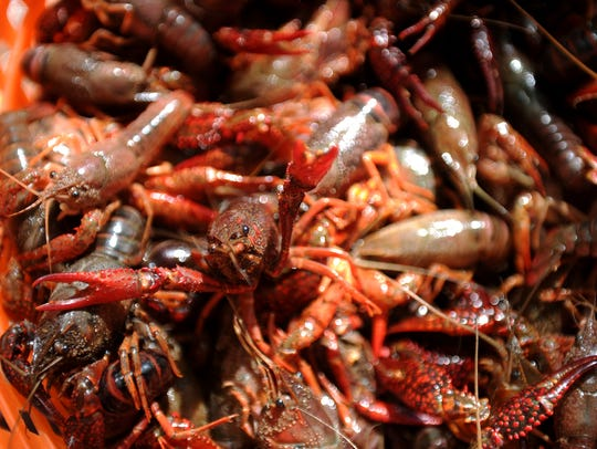 More than 5,000 pounds of live crawfish was ordered