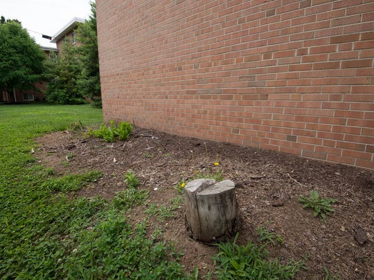 Bushes and trees were removed from around the buildings at Alder Park Apartments in Dover's Caesar Rodney Village to help prevent criminals from hiding behind them.