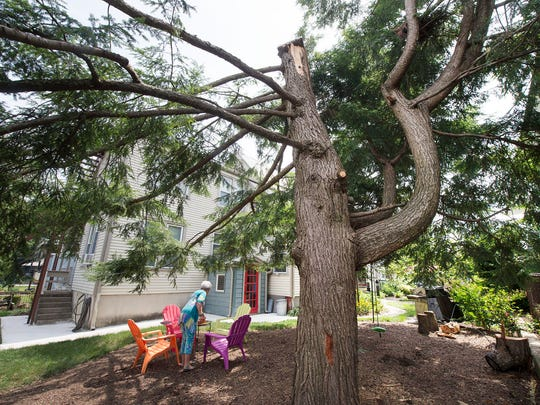 Susan Craver stands in the yard of the Linden Avenue home with the hemlock tree that her father planted in the 1960s. The bee cover is on the top of the trunk.