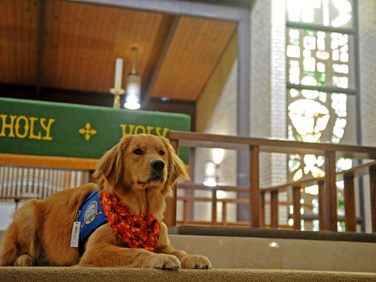 Elijah is trained Lutheran Church Charities K9 Comfort Dog at Our Redeemer Lutheran Church.