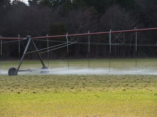 View of a field adjacent to Mountaire Farms chicken processing plant near Millsboro where they spray their waste water.