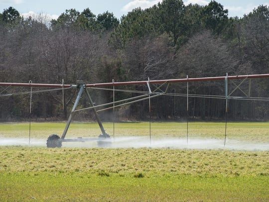 View of a field adjacent to Mountaire Farms near Millsboro where company sprays its wastewater.