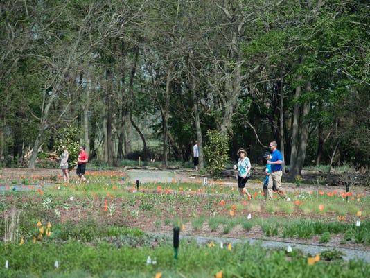 News: Meadow walk