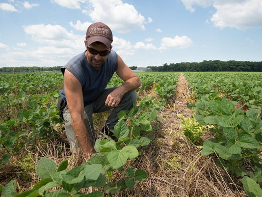 News: Soybeans