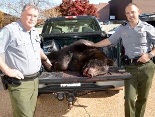 bear hit.jpg