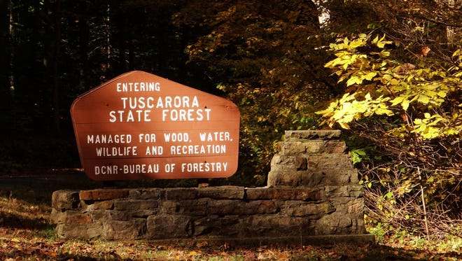 Tuscarora State Forest is located in the mountains east of the Juniata River.