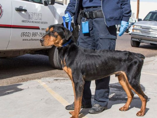 Dog taken from boarding facility