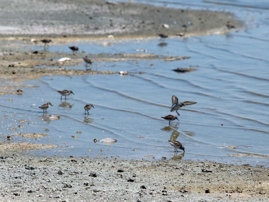 Birds gather along the shore of Bombay Beach at the Salton Sea on July 28, 2015.