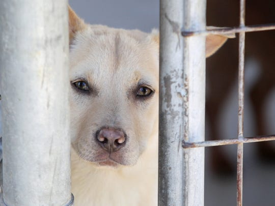 Nueces County Animal Control will host a rabies vaccine clinic from 9 a.m. to noon Saturday, April 8, at Bishop Fire Station, 205 S. Pacific St., Bishop, and from 1-4 p.m. at Driscoll Fire Station, 224 W. Main St., Driscoll. Cost: $8 per pet. Information: 361-387-5701.