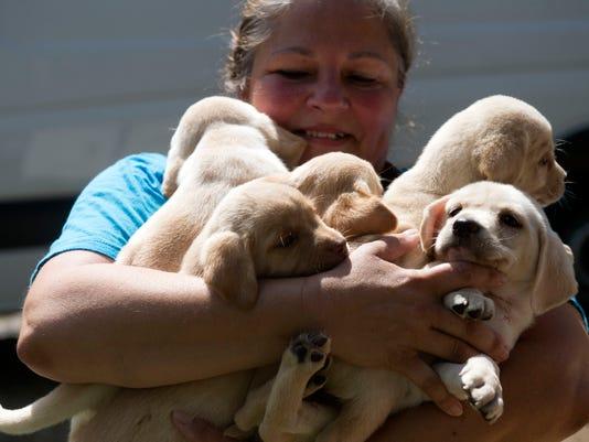 kns-pet rescue