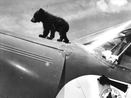 Smokey Bear was a three-month-old black bear cub who