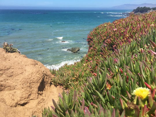 An ocean view from the Bluff trail at the Fiscalini