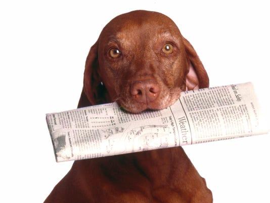 Newspaper Dog
