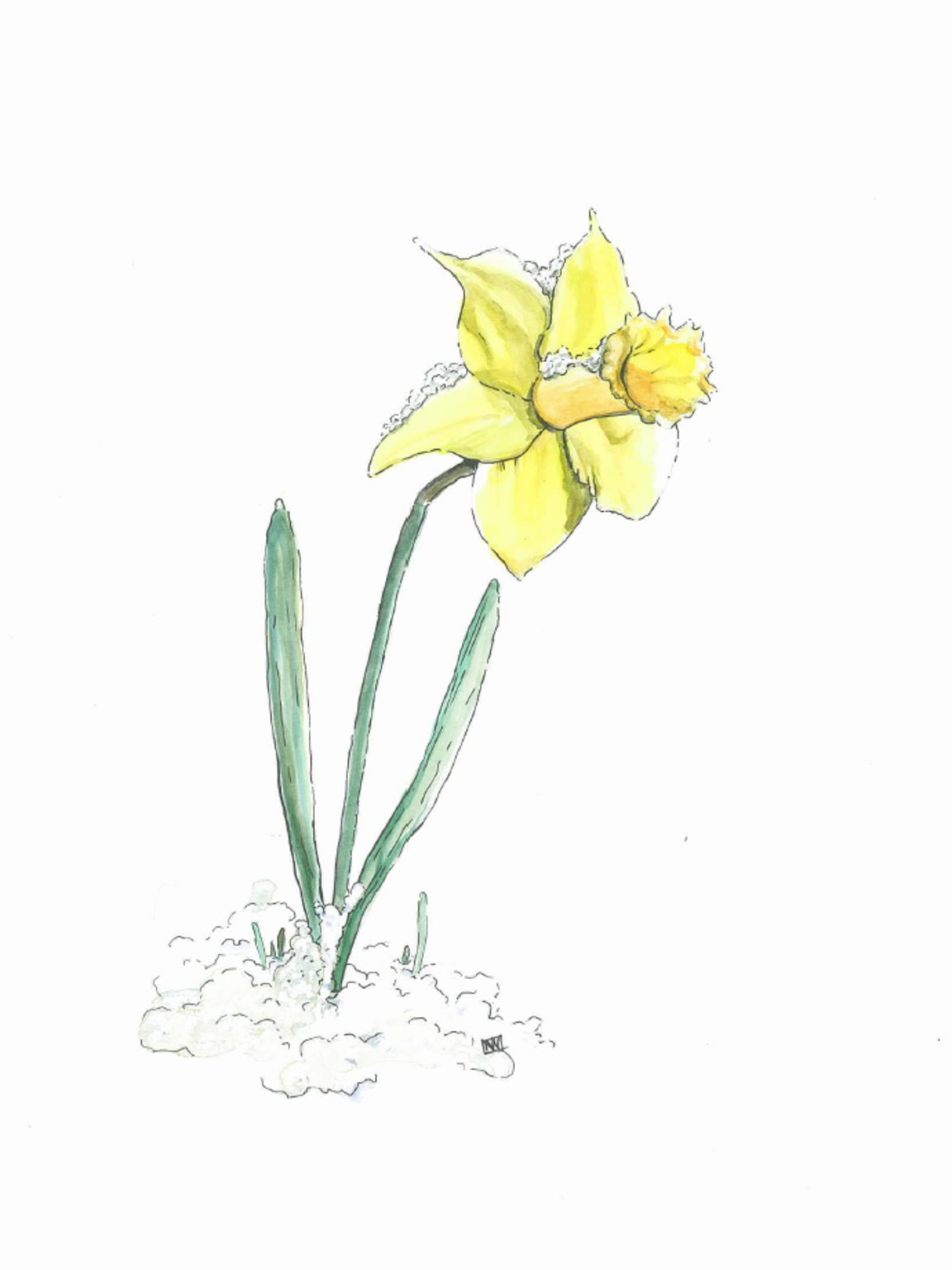March's birthday flower is the delicate yellow daffodil, a symbol of affection, cheerfulness and new beginnings. It is also signifies friendship.