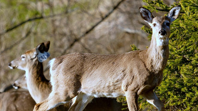 The state Department of Environmental Conservation has extended the comment period on a plan to combat chronic wasting disease, which is fatal to white-tailed deer.