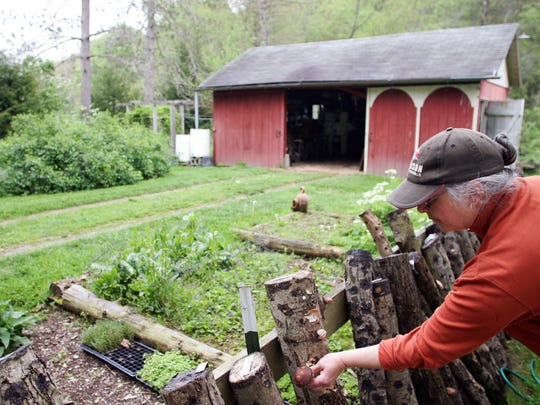 Janell Baran, owner of Blue Owl Garden Emporium, grows a variety of mushrooms on her farm.