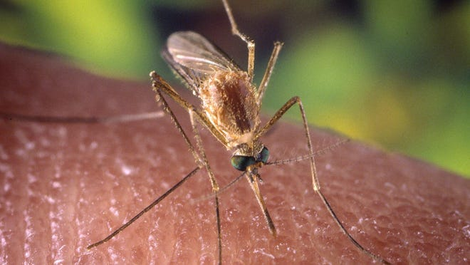 Mosquito season brings threat of West Nile.
