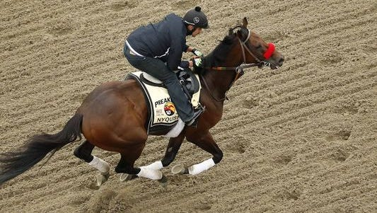 Nyquist goes for his final gallop ahead of the Preakness Stakes on Thursday, May 19, 2016, at Pimlico.