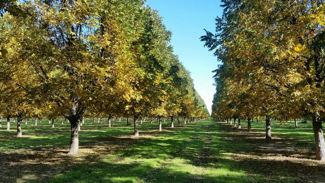 Clay County, Texas, pecan grower Tim Montz began selling the family's crop in China a decade ago. In 2016, Montz Pecan Co. exported 60 percent of its pecans to China.