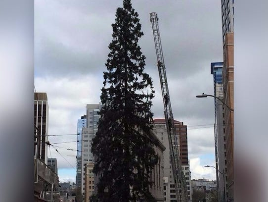 A man who climbed an 80-foot Sequoia tree in downtown