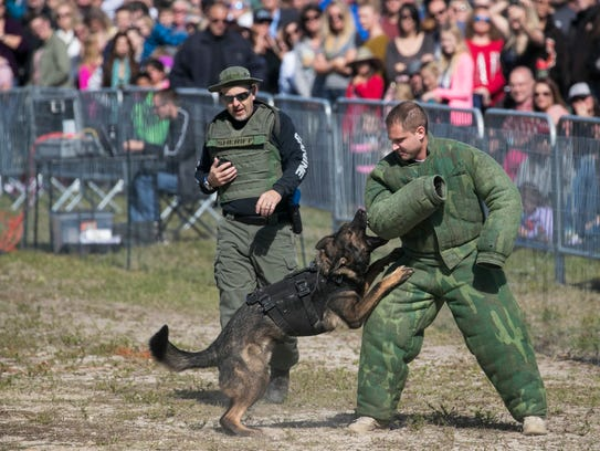 Collier County Sheriff's K-9 Titan attacks after running