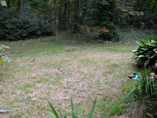 Your lawn should not look like this now. If your lawn