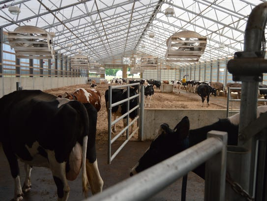 The new pack barn keeps the cows cooler in the hot