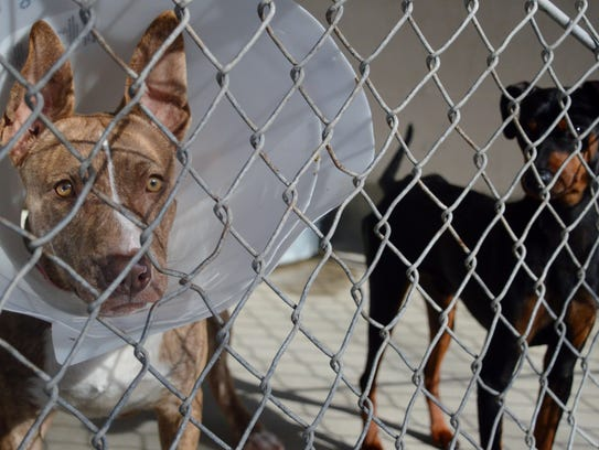 Valley Oak SPCA temporarily keeps large and small animals