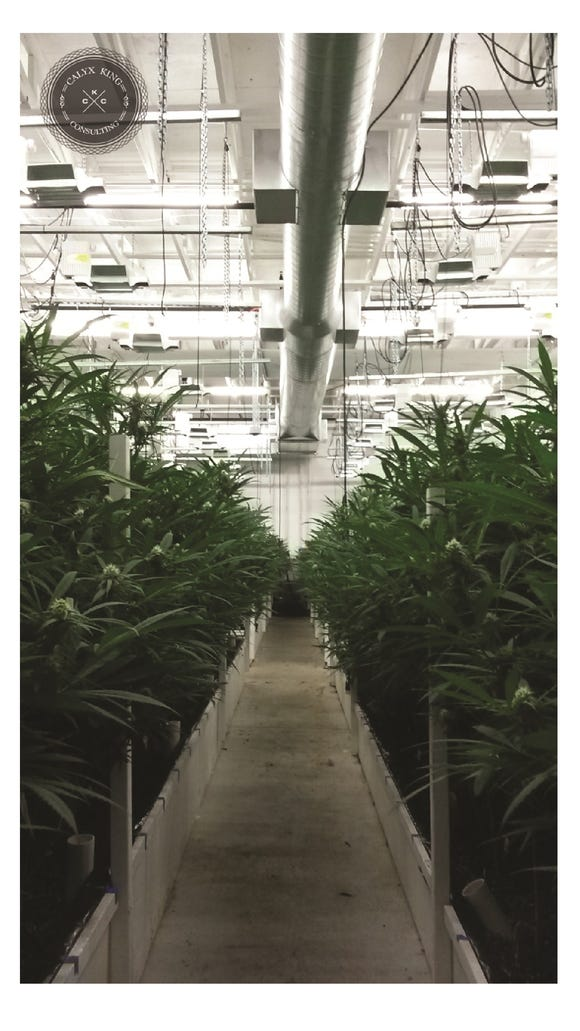 Medical marijuana growing room (Courtesy of Butler Evergreen)