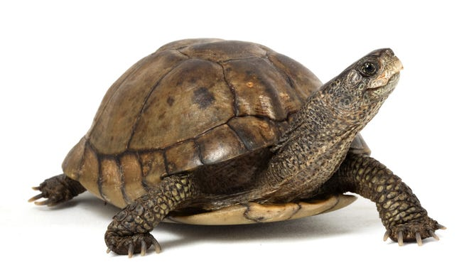 """Celebrate the turtle Saturday at The Wilderness Station in Murfreesboro. Your family can participate in the """"World's Slowest Hike"""" and learn all about turtles and their conservation at stations along the way."""