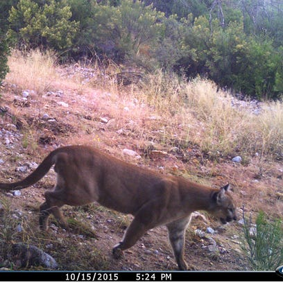 Photos captured by trail cameras, like this one showing