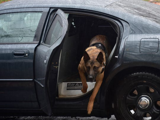 Chambersburg Police Dept. K-9 Rownan leaps from his