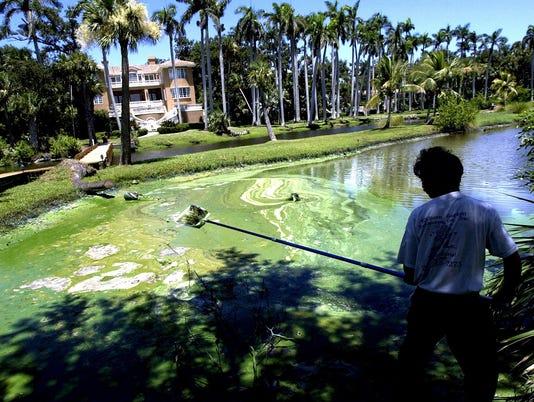 2005 blue-green algae