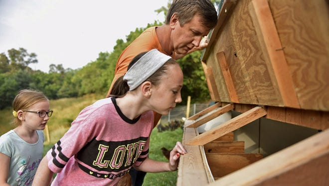 In this Thursday, July 6, 2017 photo, Madison Mowery, 11, peeks into the side of a chicken coop with her father, Robert Mowery, as Hailey Mowery, 10, watches from behind at their Moon Township, Pa. farm. While no eggs were found that morning, the family is hoping the chickens eventually produce enough eggs to sell at local farmers markets. June coyote attacks that killed at least 50 chickens set back their original plan to begin selling eggs as early as June.